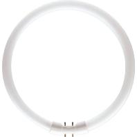Ph Tl-Buis Master Tl5 Circular Super, Koel Wit, 40W